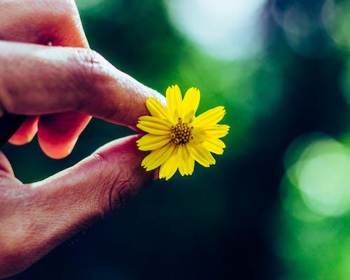 Free stock photo of beautiful flower, beautiful flowers, blurred background, canon