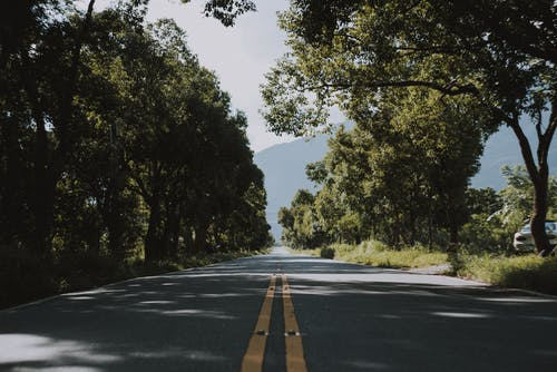 Photo of Road Near Trees