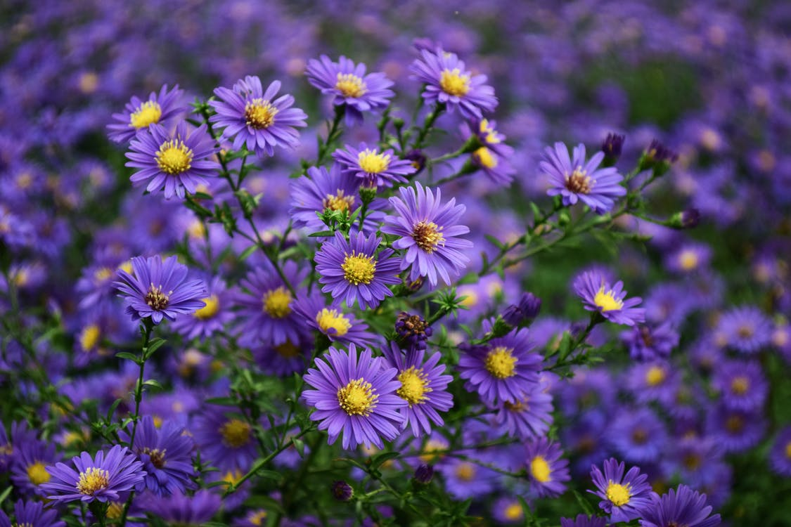 Purple and Yellow Flower