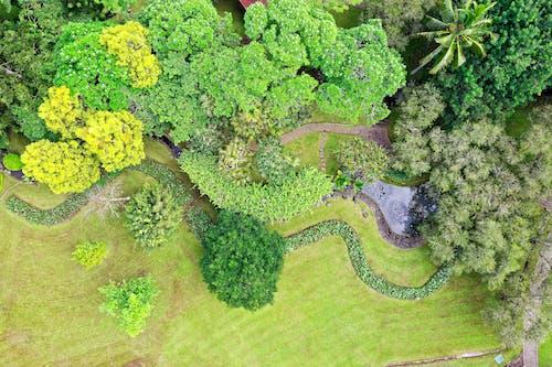 Gratis lagerfoto af dronefotografering, droneoptagelse, fugleperspektiv, græs