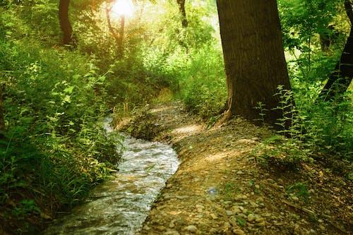 Fotos de stock gratuitas de agua, arboles, arbusto, bosque