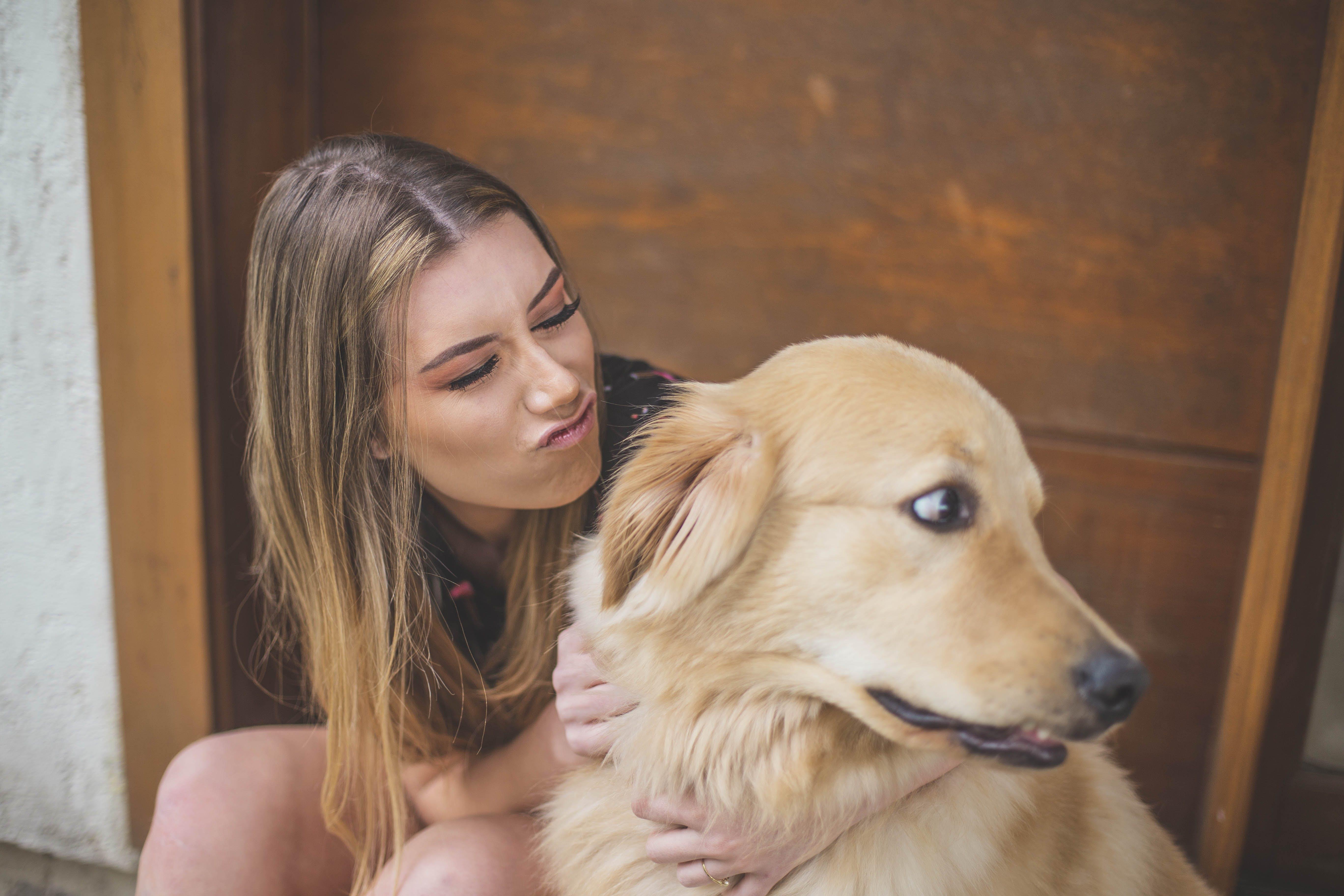 Photos gratuites de à l'intérieur, amour, animal, animal de compagnie