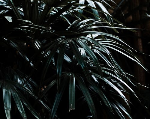 Free stock photo of conical, dark green, forest, jungle