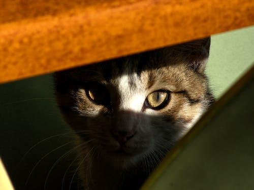 Kostnadsfri bild av katter, söta djur