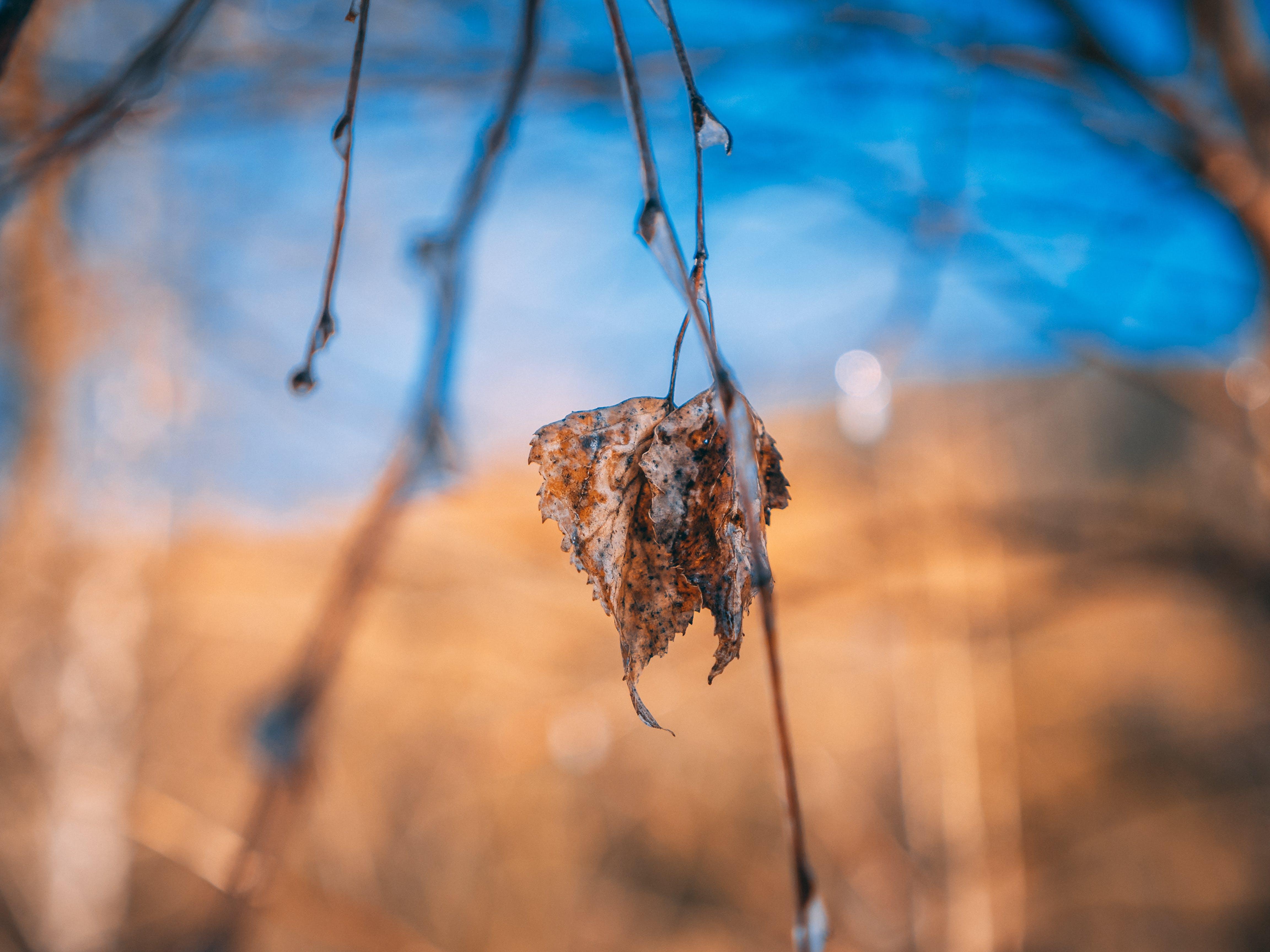 Free stock photo of blur, bokeh, cold, depth