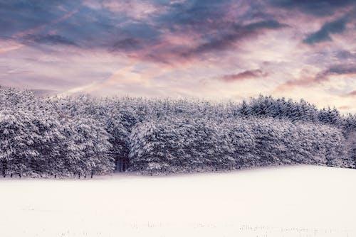 Darmowe zdjęcie z galerii z przeziębienie, śnieg, spektakularne niebo, tapeta 4k