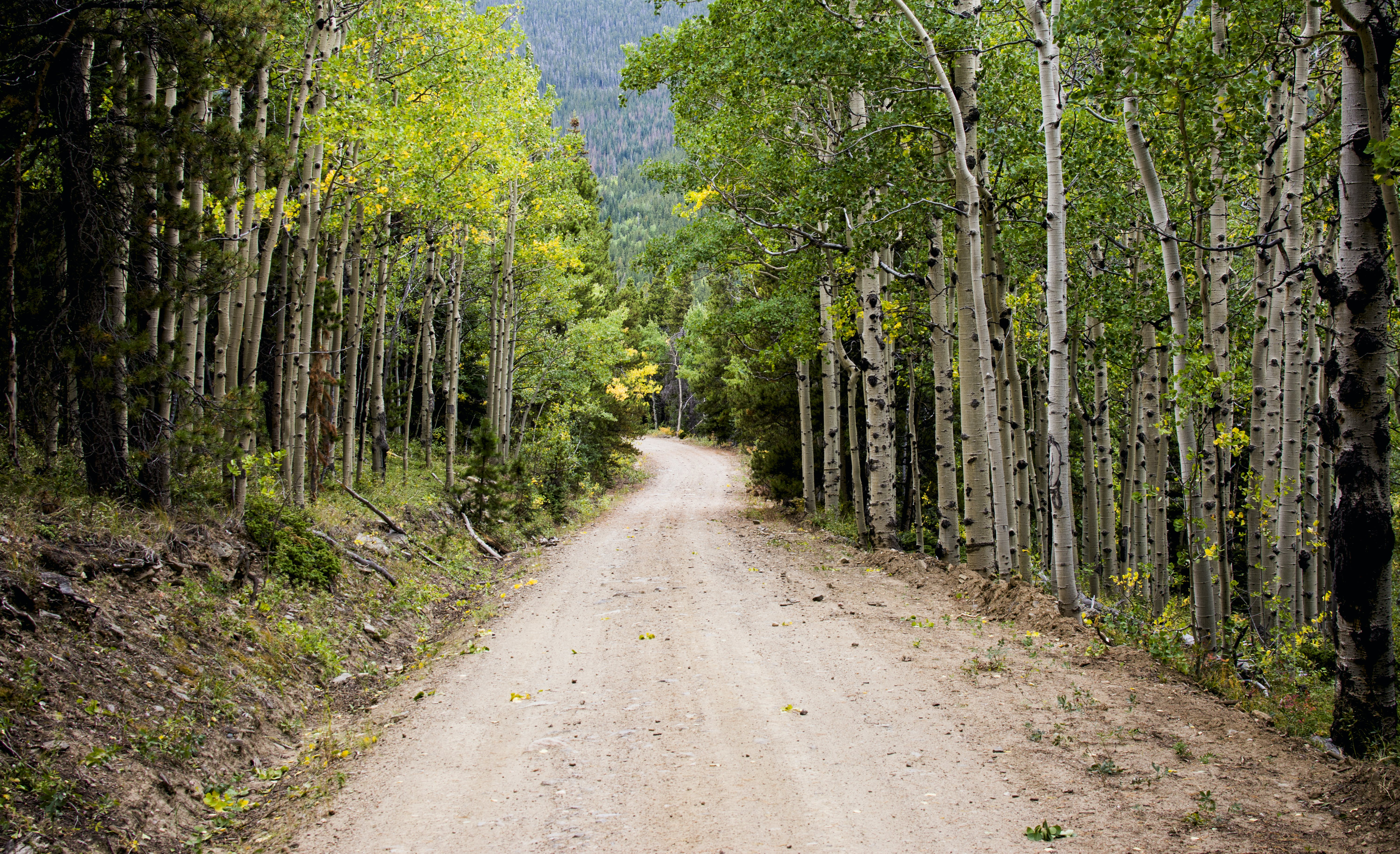 Empty Road Between Birch Trees during Daytime