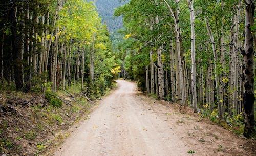 Fotos de stock gratuitas de arboles, bosque, camino de tierra, camino sin asfaltar