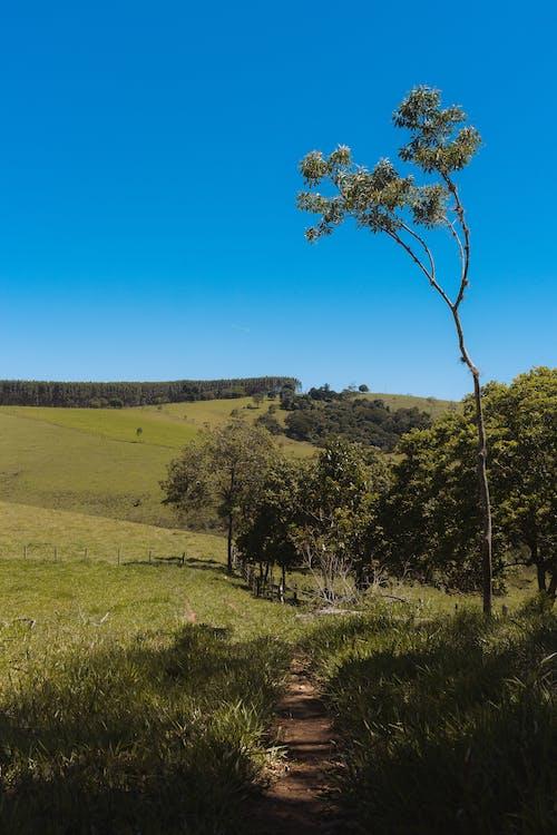 Photos gratuites de arbres, bleu, champ vert, environnement