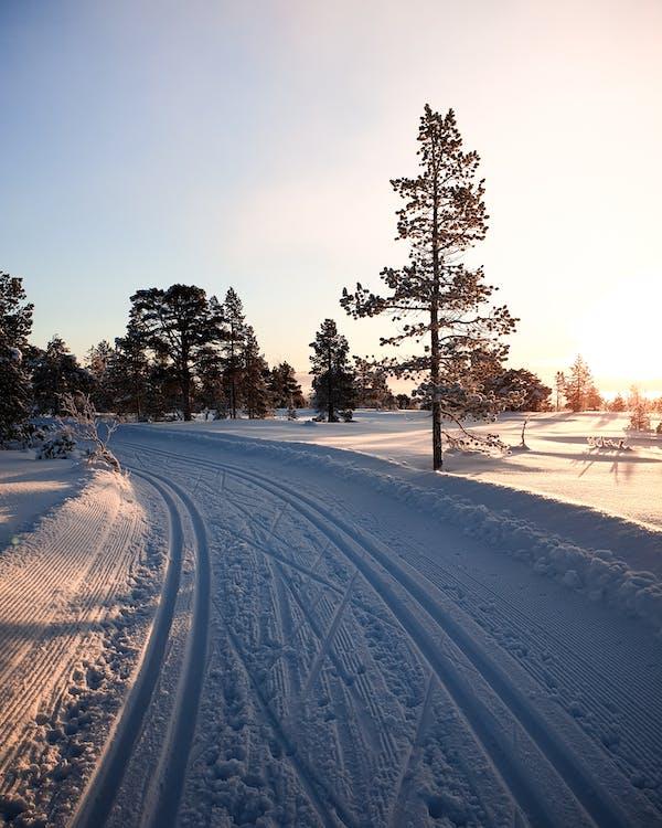 droga, drzewo, krajobraz