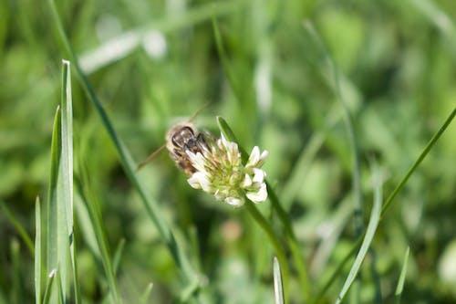 Foto profissional grátis de abelha, amarelo dourado, flor, flores bonitas