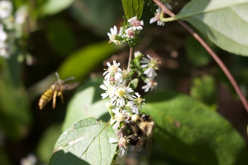 大黃蜂, 天性, 完美, 綠色 的 免費圖庫相片