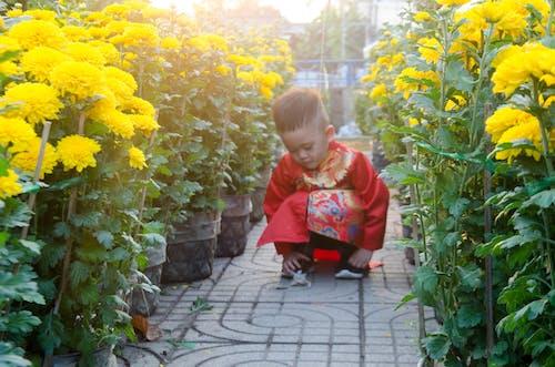 Darmowe zdjęcie z galerii z azjatyckie dziecko, dziecko, festiwal, kolor