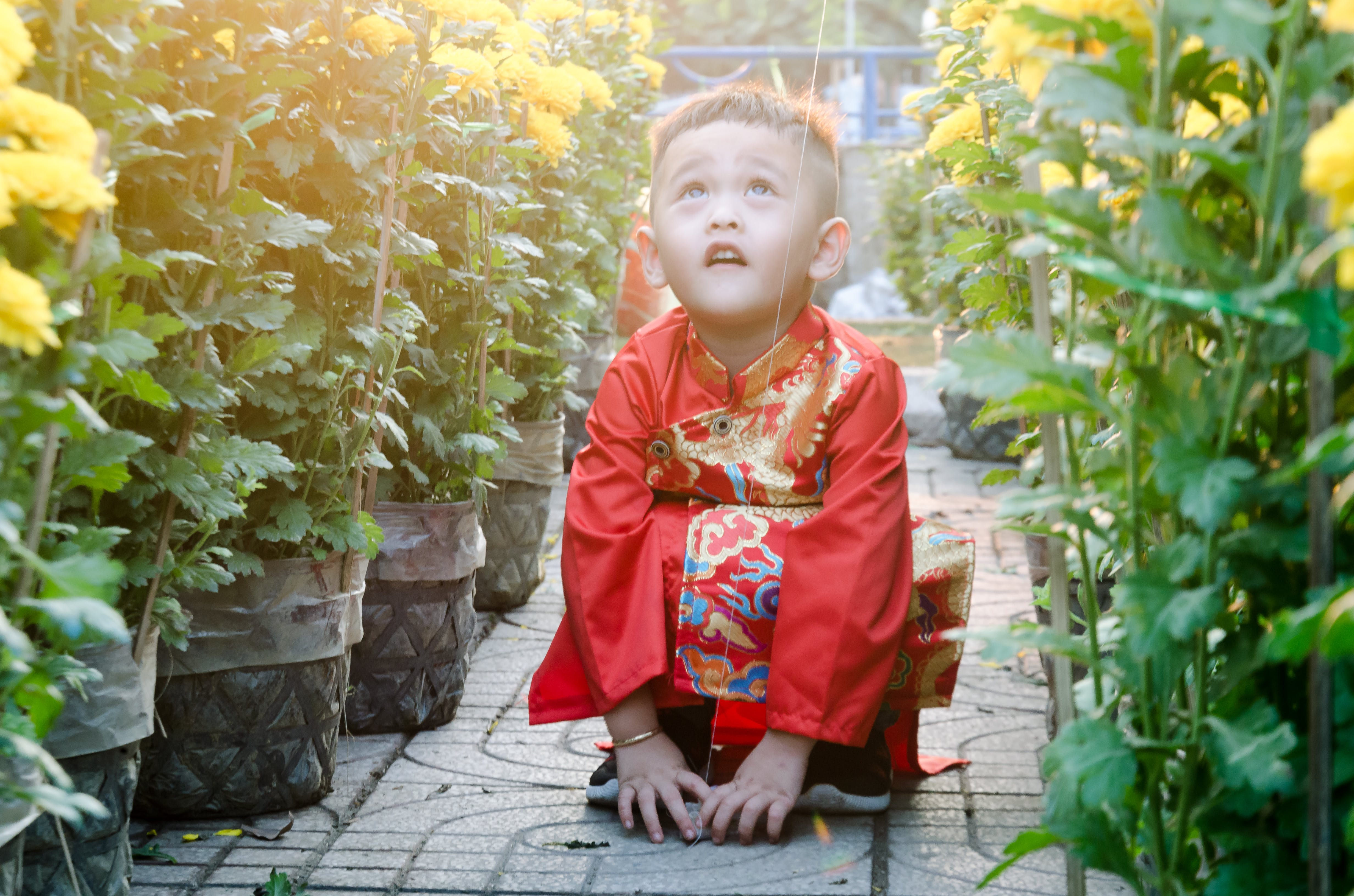 Free stock photo of asian child, beautiful, beautiful flower, color