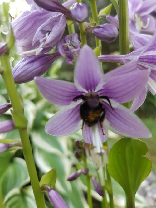 Gratis arkivbilde med #flower #nature #purple #bee