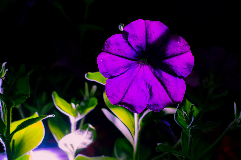 flower, green, nature