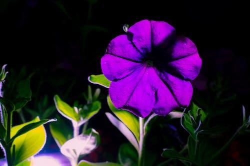 Kostenloses Stock Foto zu blume, grün, lila, lila blüten