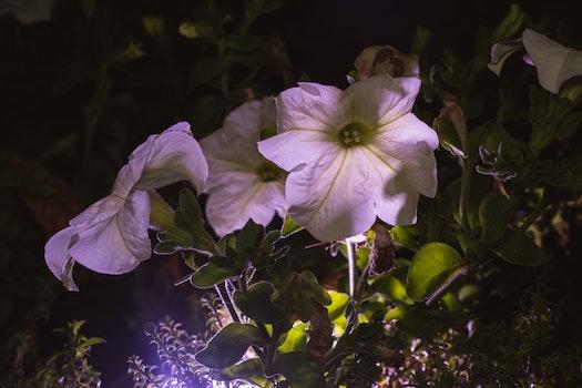 Kostenloses Stock Foto zu natur, nacht, blumen, lila