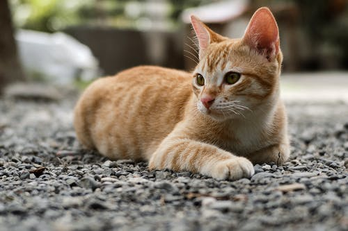 Selective Focus Photography Of Orange Tabby Kitten
