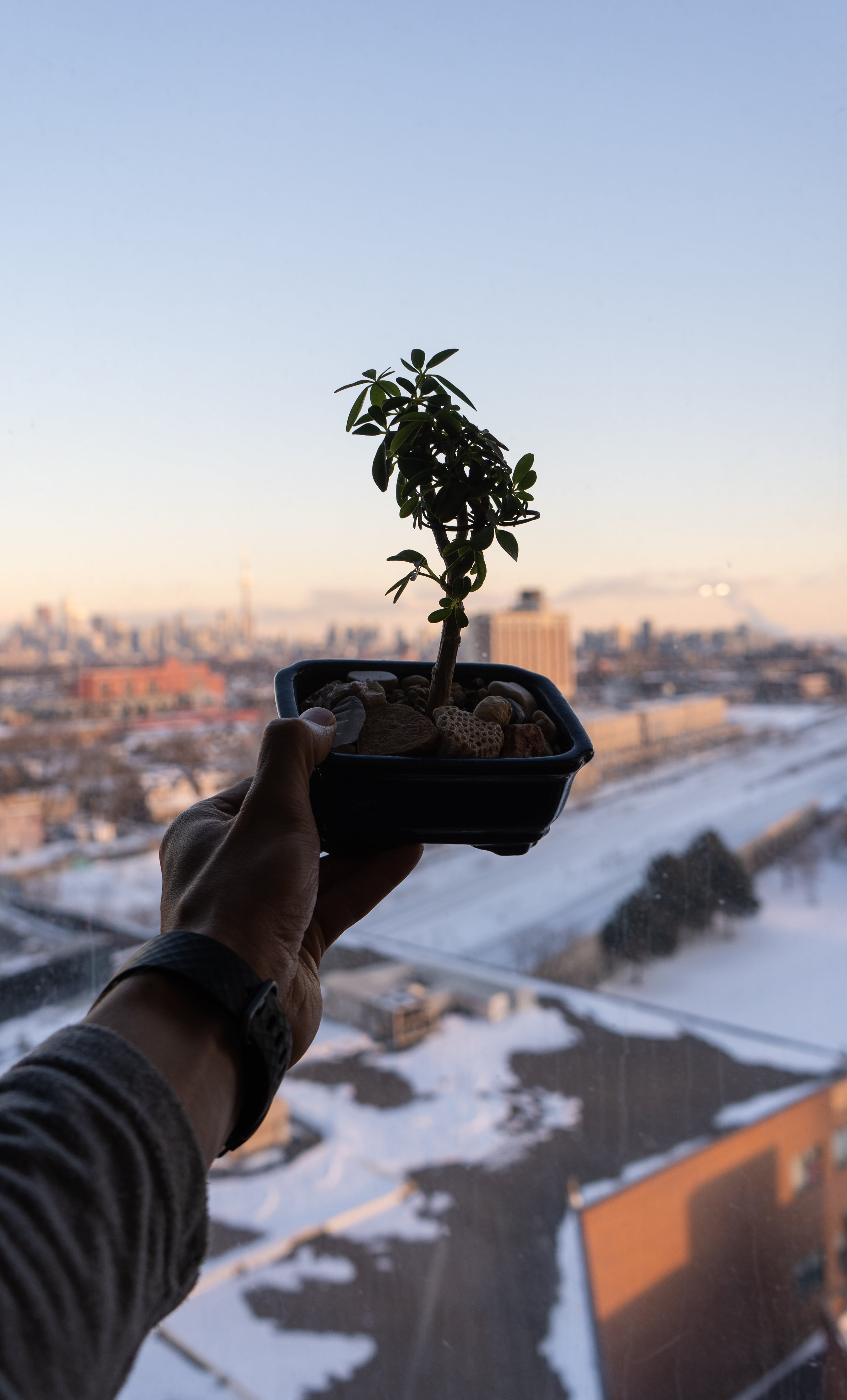 Free stock photo of bonsai, city view, indoor plants