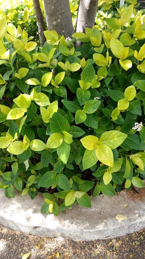 廠, 灌木, 綠色 的 免費圖庫相片