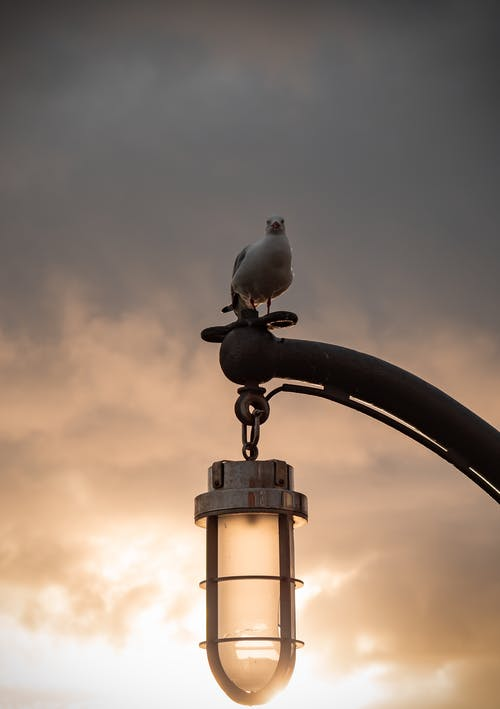 Photo of White Seagull Perched on Lamp Post