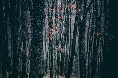숲, 어두운의 무료 스톡 사진
