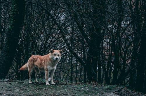Imagine de stoc gratuită din câine, codru, închis la culoare