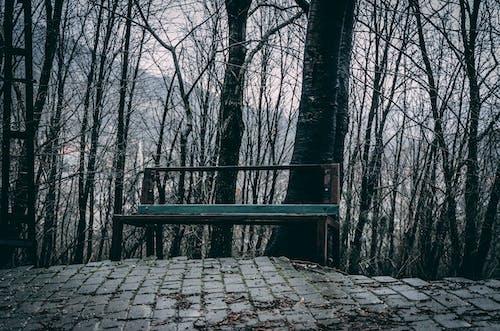 길가, 벤치, 숲, 어두운의 무료 스톡 사진
