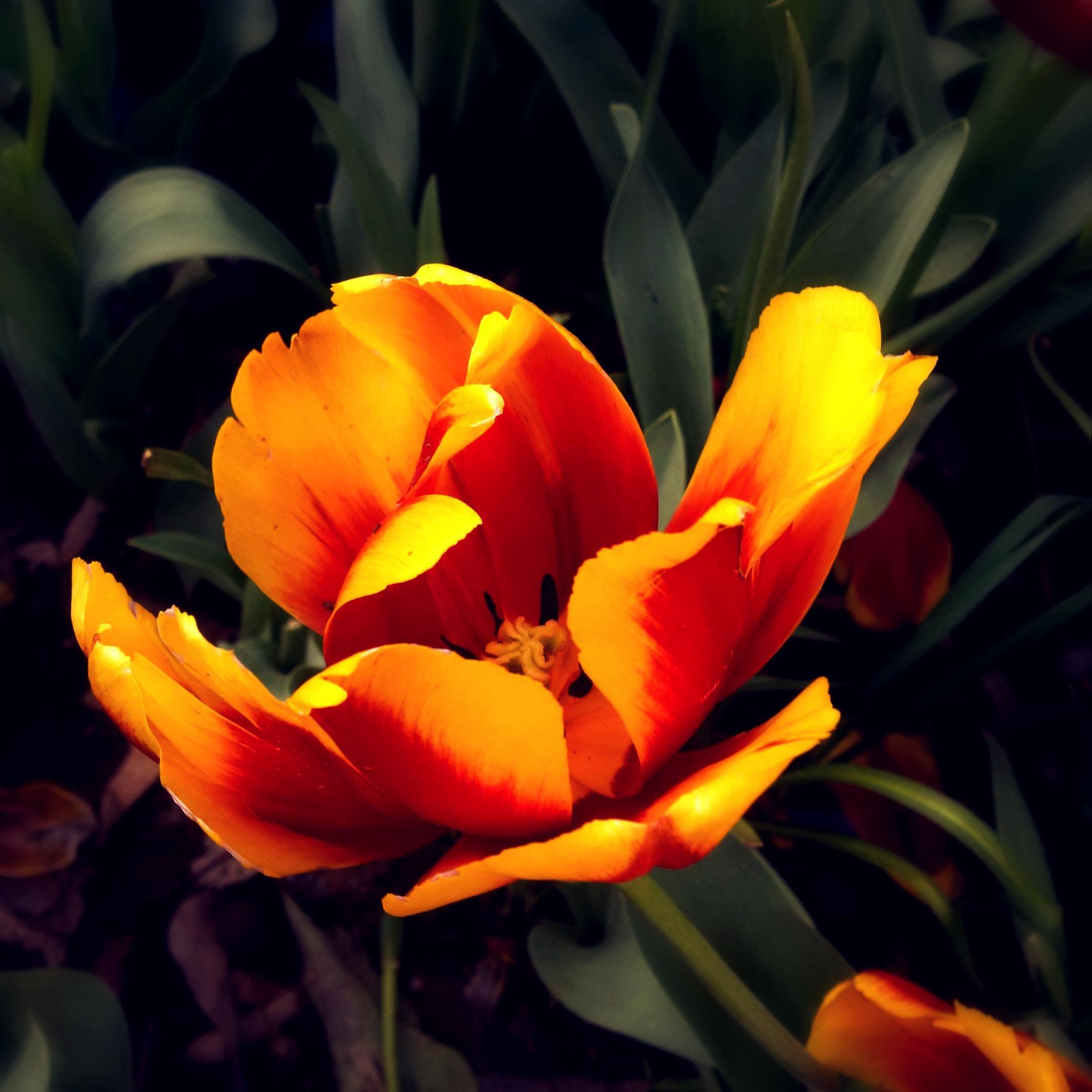 beautiful flowers, flower, orange flower