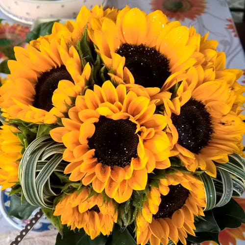 Free stock photo of #sunflower