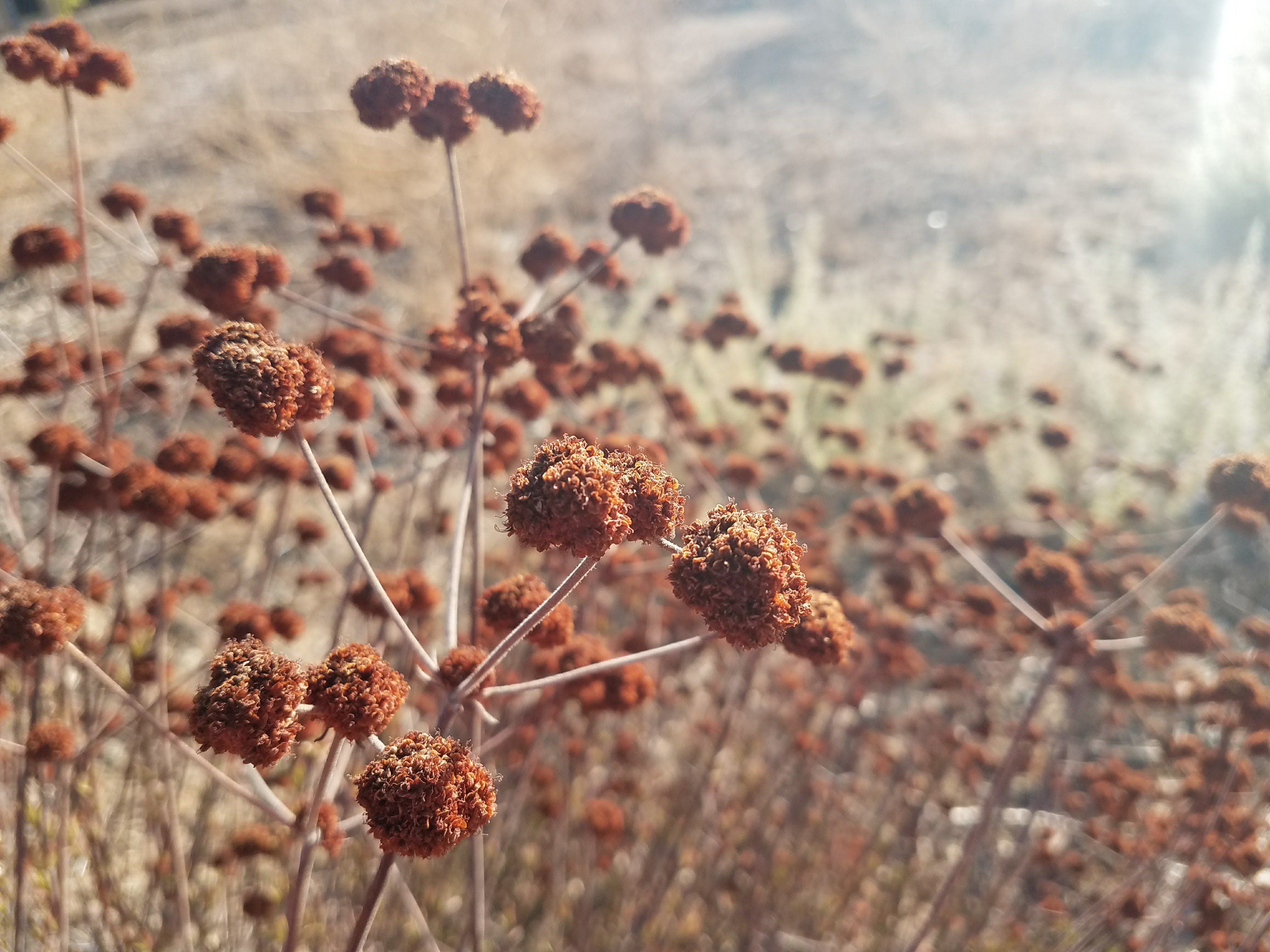 Free stock photo of brown, nature, plants
