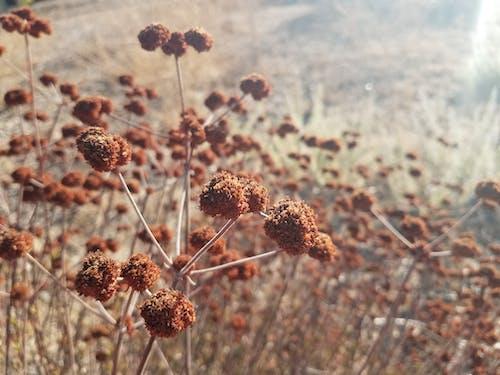 Безкоштовне стокове фото на тему «заводи, коричневий, Природа»