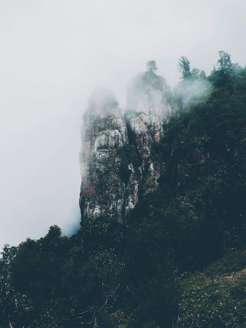 Ảnh lưu trữ miễn phí về Adobe Photoshop, ảnh trừu tượng, cây, chụp ảnh thiên nhiên