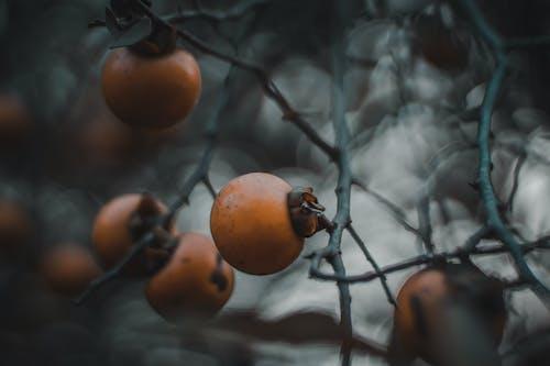 Ilmainen kuvapankkikuva tunnisteilla aasialainen ruoka, hedelmä, hedelmäpuu, hedelmät