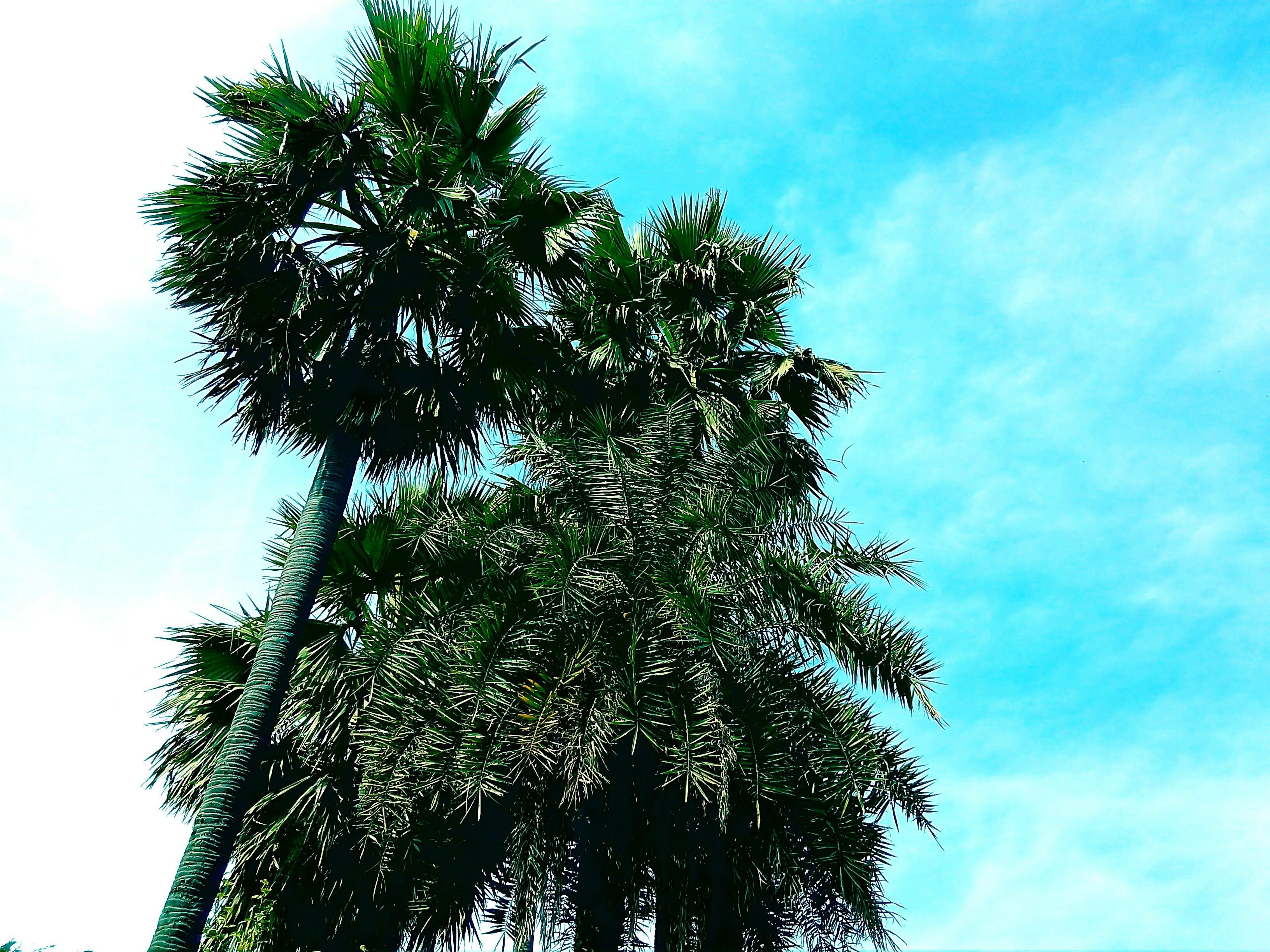 Gratis lagerfoto af blå himmel, computer tapet, desktop tapet, flora