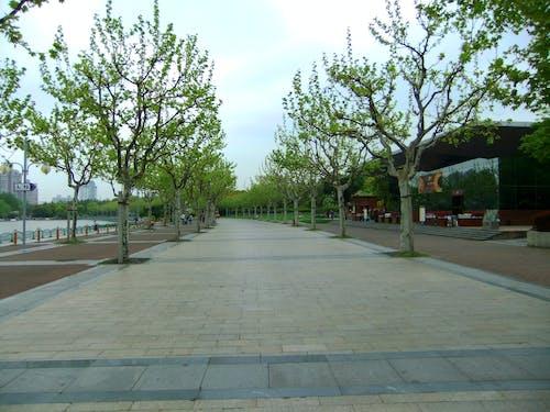 Free stock photo of empty street