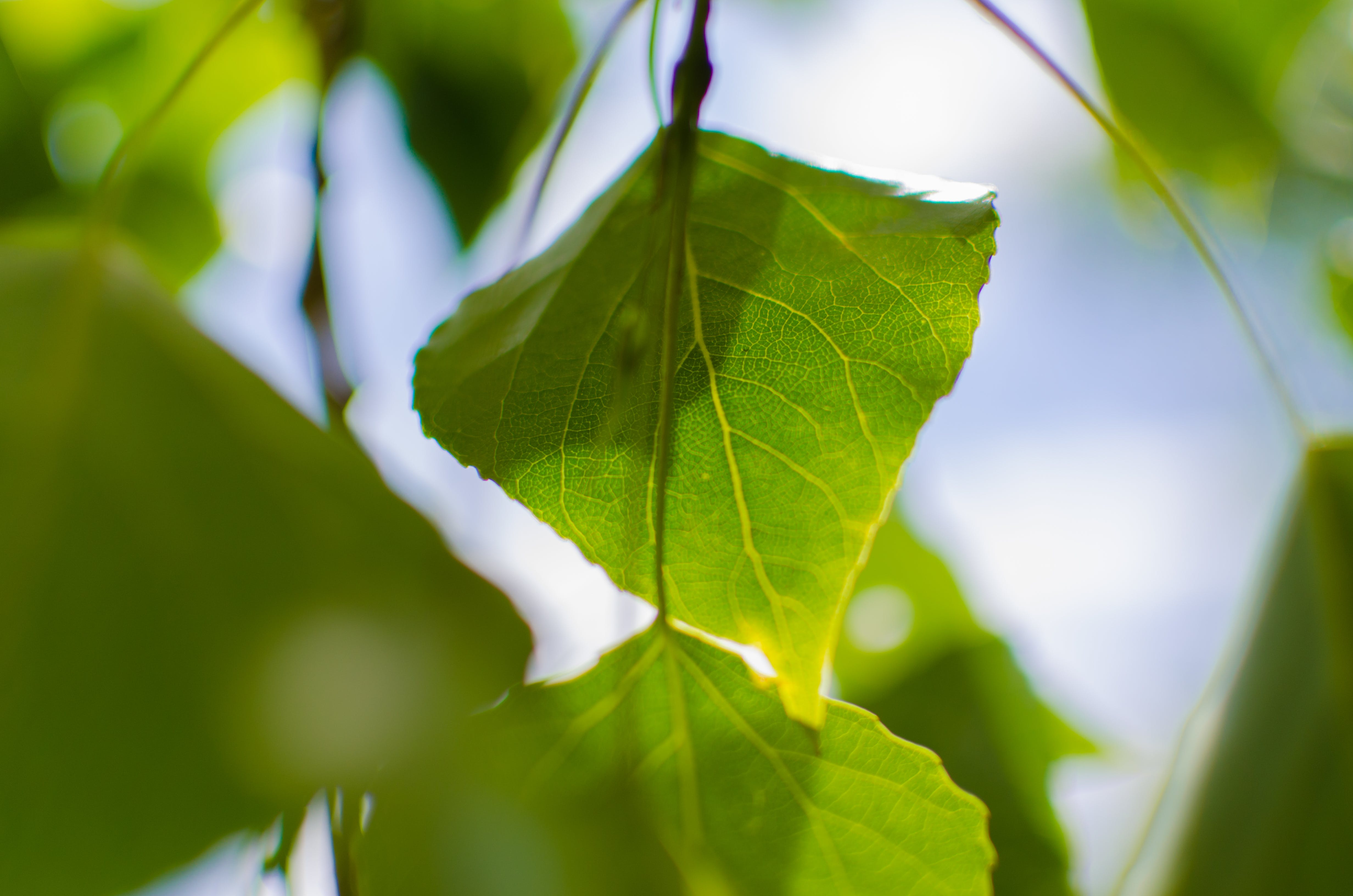 Close Up Photo of Green Leaf during Daytime