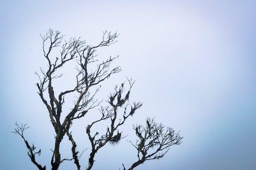 Základová fotografie zdarma na téma holý strom