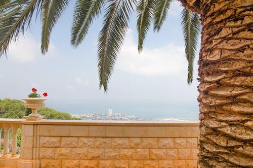 Gratis stockfoto met bahai tuinen, palmboom, plaats, stadsgezicht