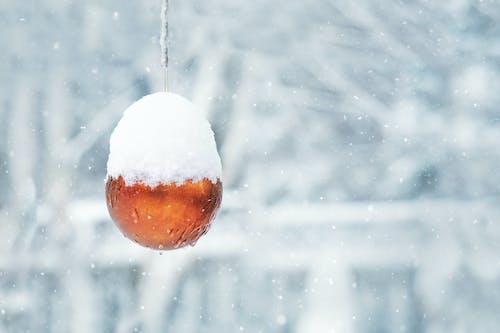 Ảnh lưu trữ miễn phí về giáng sinh, lạnh, lý lịch, màu xanh da trời