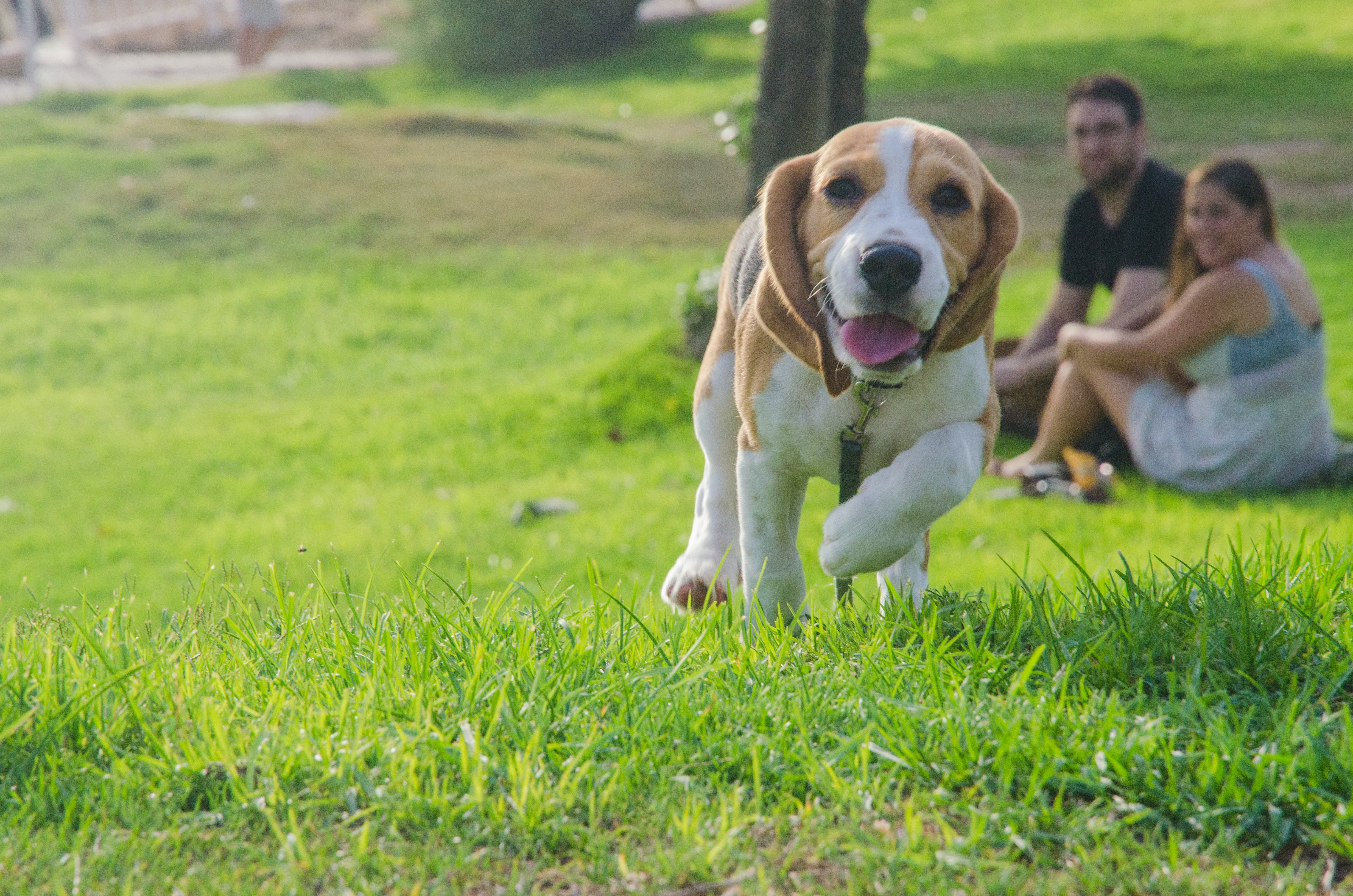 Free stock photo of dog, grass, family, happiness