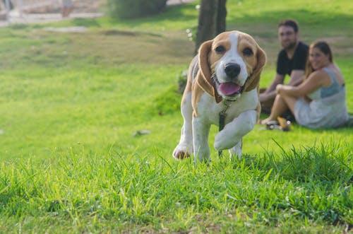 Gratis stockfoto met blijdschap, familie, gras, hond