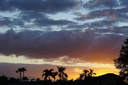 Δωρεάν στοκ φωτογραφιών με δύση του ηλίου, ουρανός, φλόριντα, φοίνικες
