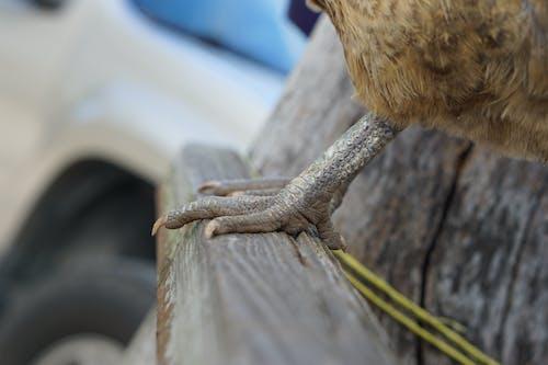 Foto d'estoc gratuïta de espores, fusta, granja, peus
