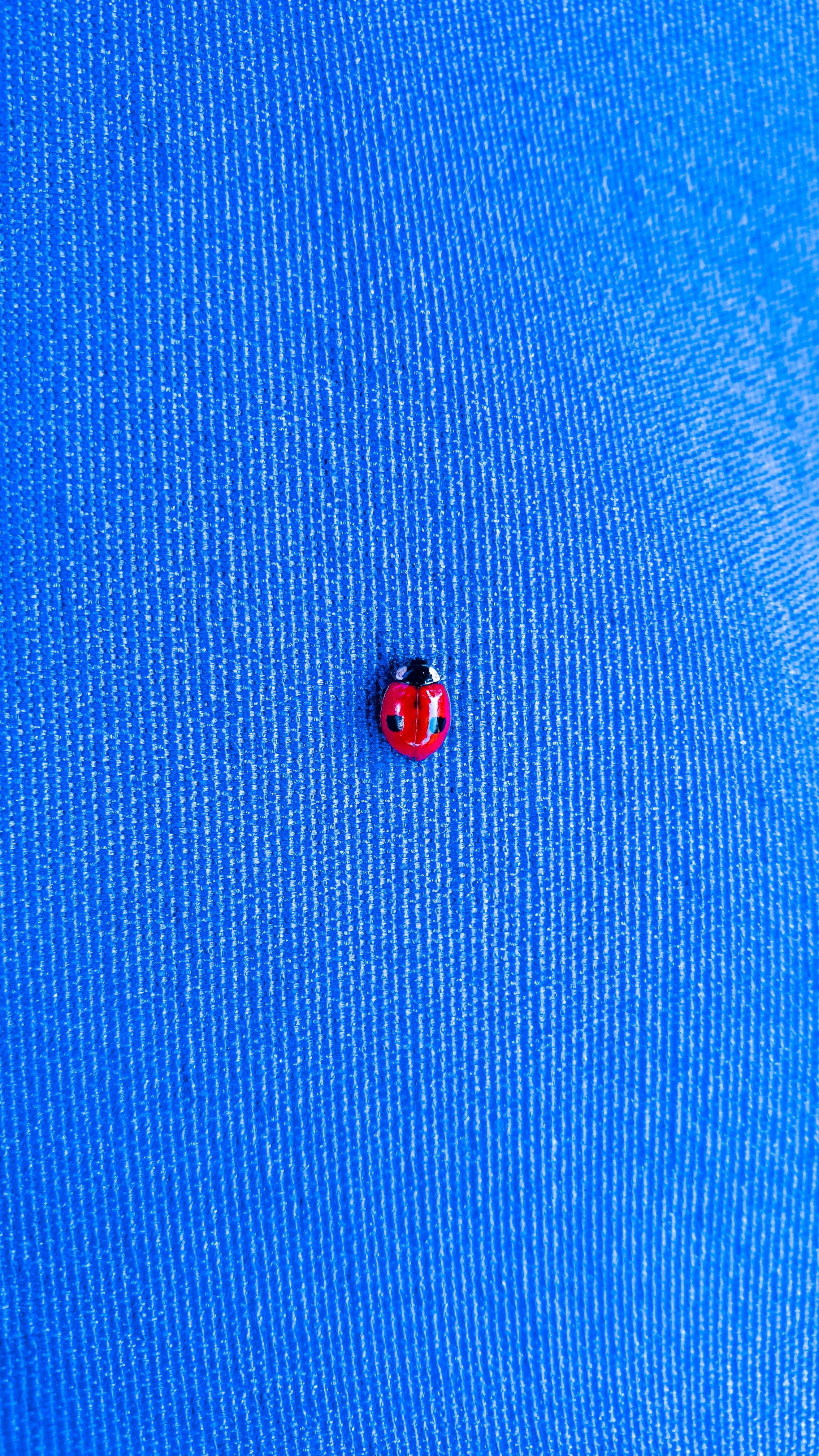Kostenloses Stock Foto zu blau, blauem hintergrund, bug, insekt