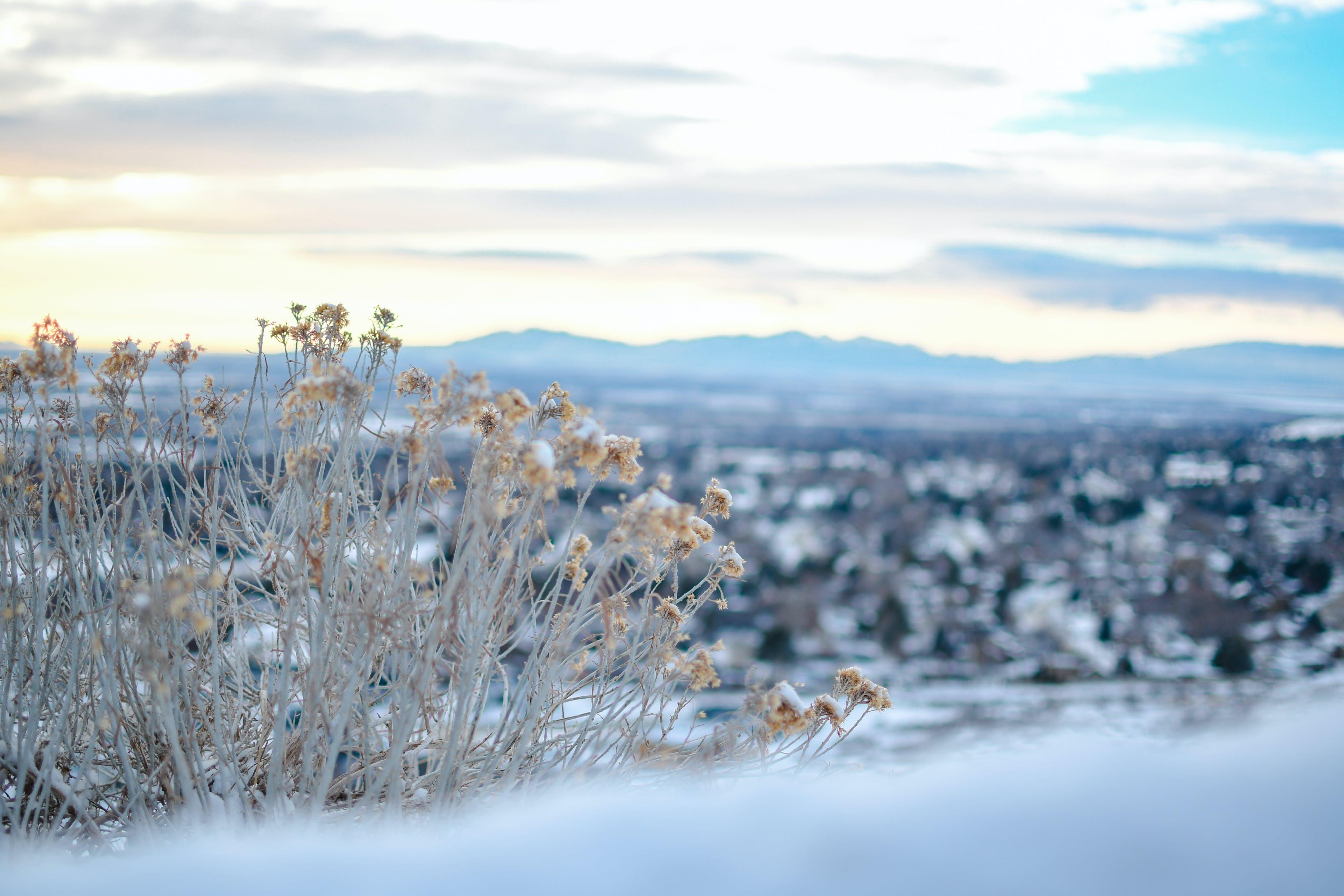 Free stock photo of beautiful view, city, mountain, reflection