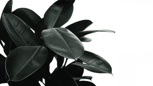 Beyaz arka plan, bitki, büyüme, Desen içeren Ücretsiz stok fotoğraf