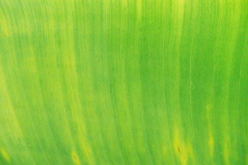 Ingyenes stockfotó közelkép, levél, zöld témában