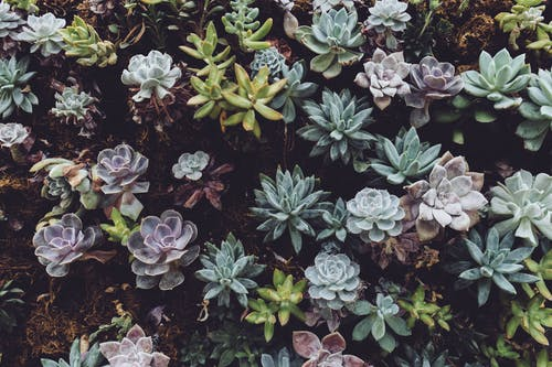 Photo of Succulent Plants